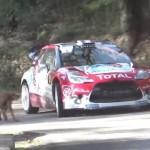 La Citroën DS3 WRC à deux doigts du chien